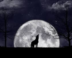 Honour this full moon, go outside and howl with the wolves